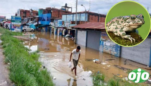 Amazonas: tres niños mueren tras consumir huevos de sapo