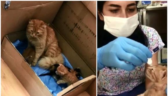 Una gata lleva a sus crías enfermas hasta una clínica veterinaria para que las atiendan. (Foto: Twitter)