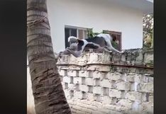 Perro trepó una palmera y presenció la tremenda pelea de sus vecinos