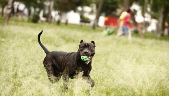Los dueños tienen que pasear a sus mascotas con sus correas caso contrario serán multados con S/440.00. (Foto: GEC)