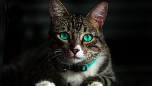 Steve Bouquet mató a nueve gatos e hirió a otros siete entre 2018 y 2019. (Foto referencial - Pexels)