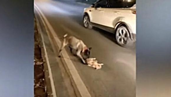 Aunque el felino murió en el acto, el perro hizo todo lo posible para retirarlo de la calle tras el accidente. (Foto: world news for all / YouTube)