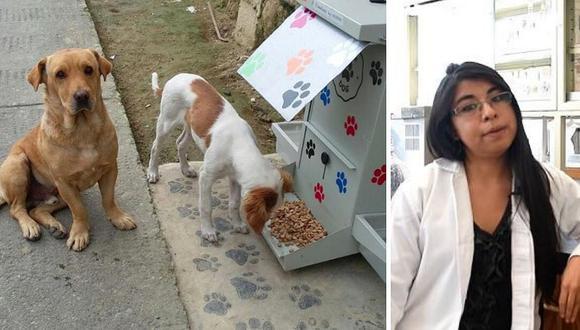 Veterinaria crea galletas anticonceptivas para perros callejeros