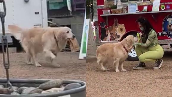 Un video viral muestra a una adorable perrita entregando pedidos de comida para perros en un food truck. | Crédito: ViralHog / YouTube