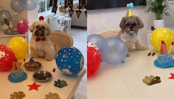 Un video viral muestra la gran fiesta de cumpleaños que le hicieron a un perrito, que pasó este día especial junto a su inseparable amigo. | Crédito: @mrteddytedster / TikTok.