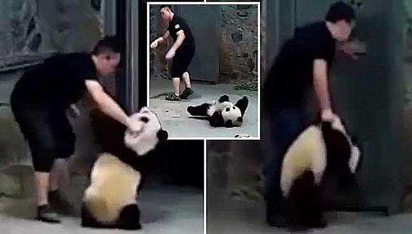 Cuidadores golpean a pequeños osos pandas en peligro de extinción (VIDEO)