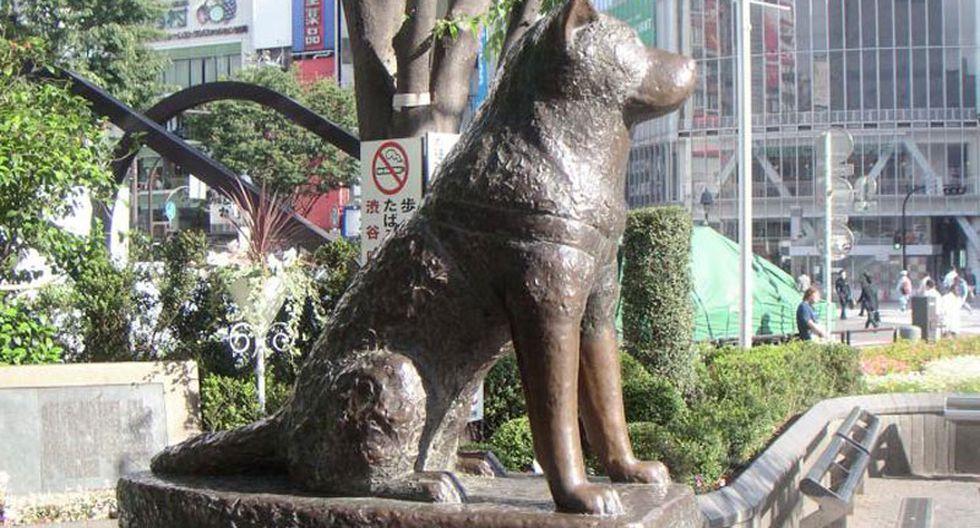 El perro Hachiko no era leal, sino adicto al pollo