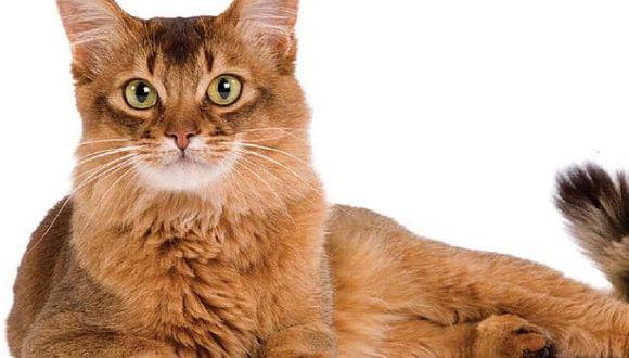 Cómo lograr que tu gato responda a tu llamado, según los especialistas