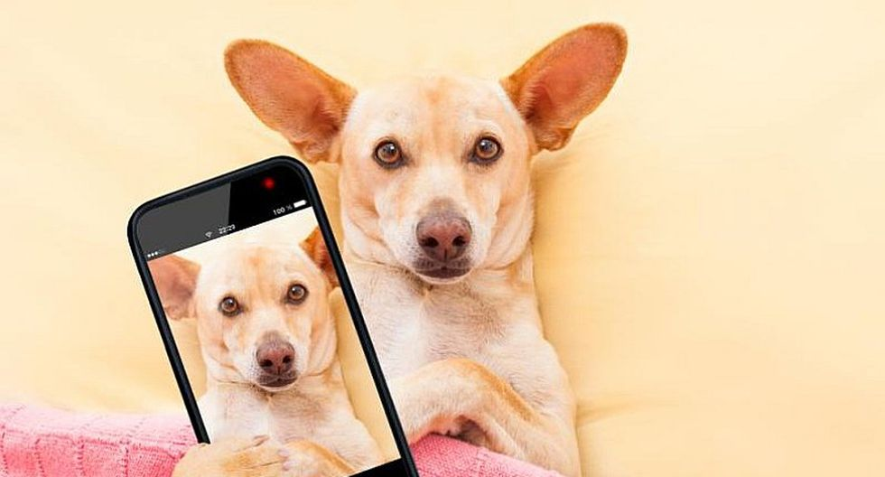 Cachorro tiene particular reacción cuando le piden un 'selfie'