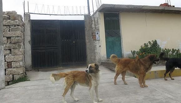 Advierten rebrote de rabia canina en Arequipa y encuentran segundo caso en menos de 7 días (Foto: archivo)