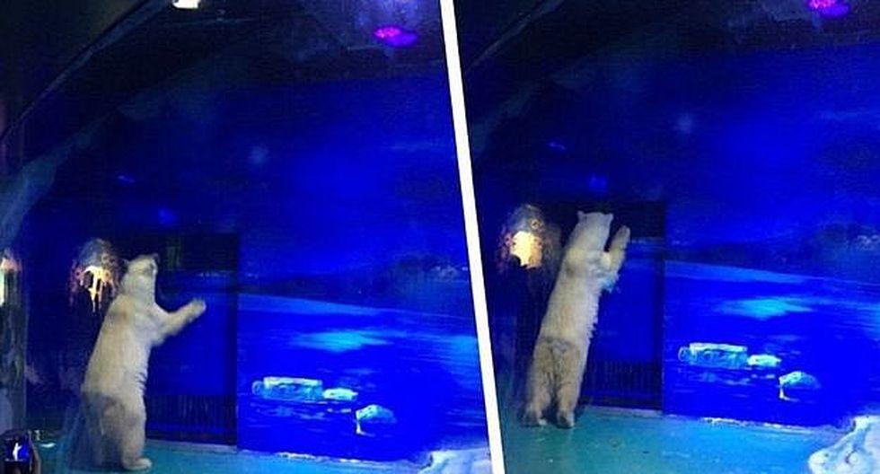 """Un millón de personas pide la libertad de Pizza, """"el oso polar más triste"""""""