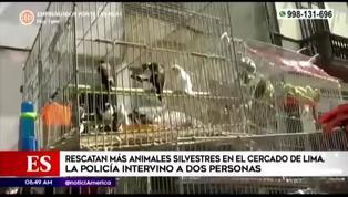 Rescatan a más de100 animales silvestres que iban a ser vendidos ilegalmente