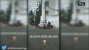 Perritos callejeros son alimentados por misterioso hombre de gran corazón