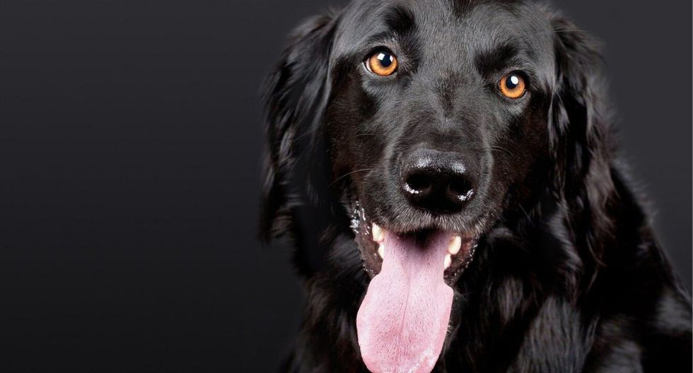 Ante una convulsión canina hay que actuar rápidamente. (Foto: Pixabay)