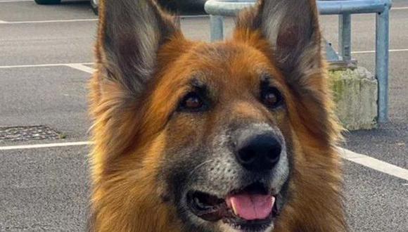 Valiente perro policía dio con delincuente que se escondía.