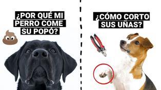 ¿Por qué mi perrito come su popó? ¿Cómo debo cortarle las uñas ? Un veterinario responde las dudas