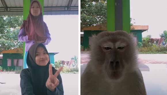 El mono sorprendió y asustó a las dos jóvenes. Ellas corrieron y el simio aprovechó el momento y se llevó el celular. (Foto: Captura de vídeo)