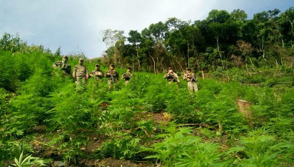 Al momento de intervenir el centro poblado, no se encontró a los responsables y dueños del ilícito cultivo (Foto: CC.FF.AA.)