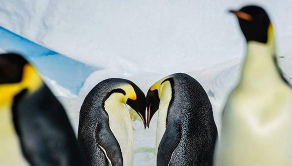 Miles de crías de pingüinos emperadores se ahogan en catástrofe en la Antártida