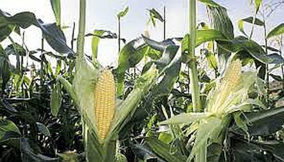 Envases de plástico del futuro se fabricarán con azúcar de maíz