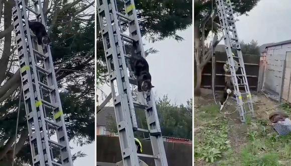 El gato aprovechó que los bomberos colocaron la estructura y bajó rápidamente con dirección desconocida. (Foto: Captura de pantalla)