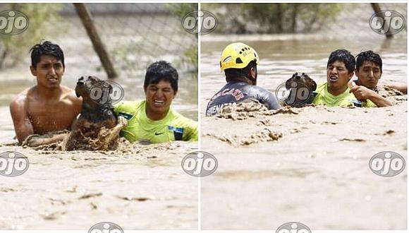Mascotas: perrito se salva de milagro tras ser rescatado en pleno huaico en Huachipa (VIDEO)