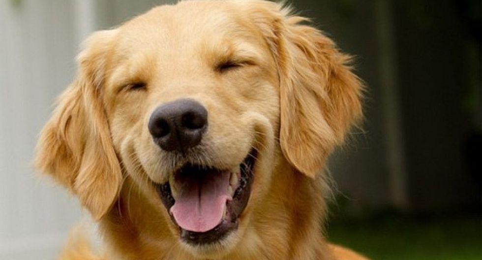 Perro causa la risa de los cibernautas por peculiar forma de dormir