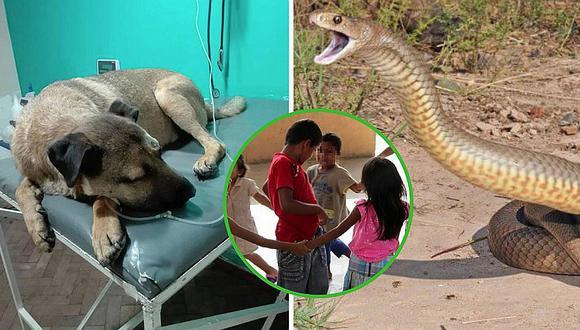 Perro héroe le salva la vida a 3 niños que iban a ser atacados por serpiente (FOTOS)
