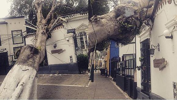 Árbol cae sobre inmueble en Avenida de Osma en Barranco (FOTOS)