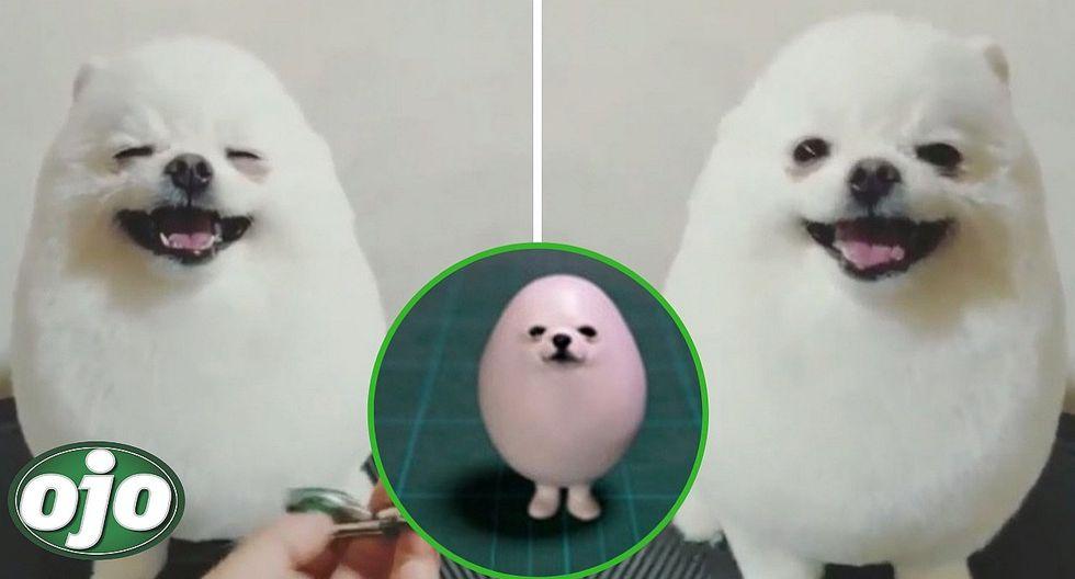 Perrito es sensación de las redes sociales por su gran parecido a un huevo (FOTOS Y VIDEO)