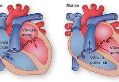 Sístole y Diástole : Los movimientos del corazón