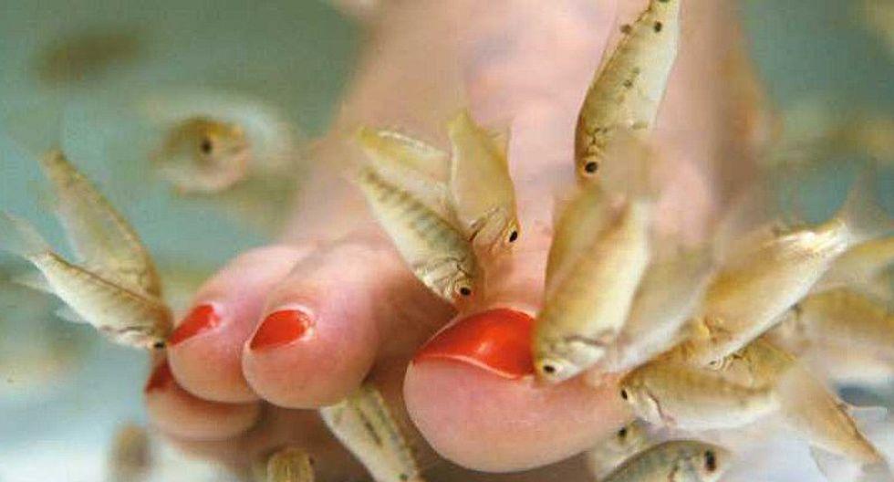 Tratamiento de belleza con peces deja sin dedos a una mujer
