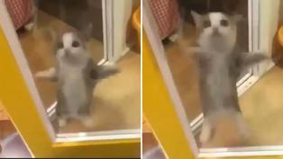 """El gatito que generó sensación con pasos de baile del """"Aserejé"""""""