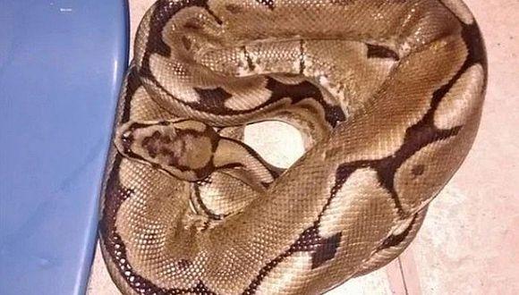 Mujer despertó con una serpiente pitón en su propia cama
