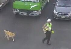 Policía para el tránsito para ayudar a perrito | VIDEO