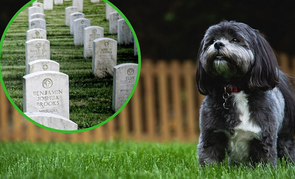 Sacrifican a una perrita en buen estado de salud para que sea enterrada junto a su dueña
