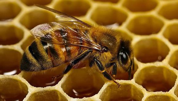 ¡No te imaginas qué significa soñar con abejas!