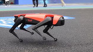 """""""AlphaDog"""" un perro robótico que protege a sus dueños y propiedades"""