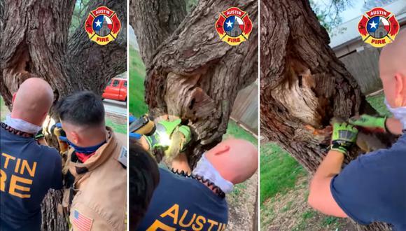 No solo en los incendios, los bomberos muchas veces deben acudir a llamados para rescatar animales. (Foto: Difusión)