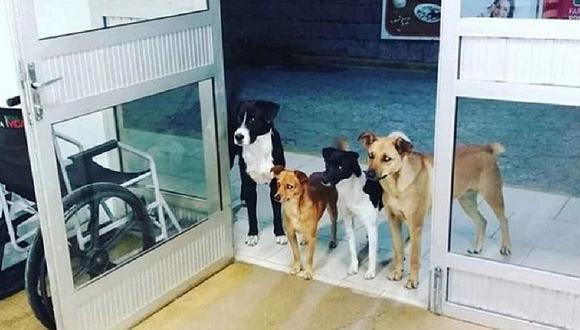 Cuatro perritos esperan salida de su dueño en la puerta de emergencia de hospital