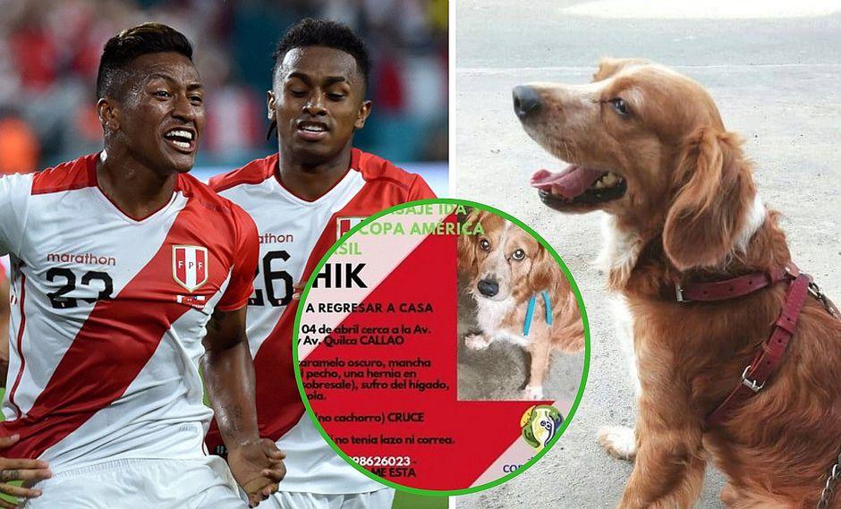Perrito se pierde entre Callao y SMP: dueño ofrece pasajes para la Copa América 2019 como recompensa