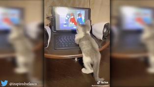 Gatito se entretiene viendo 'Tom y Jerry' en tablet