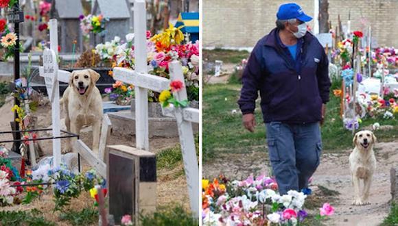 Bobby es un perro fiel, más fiel que los humanos y de lejos.