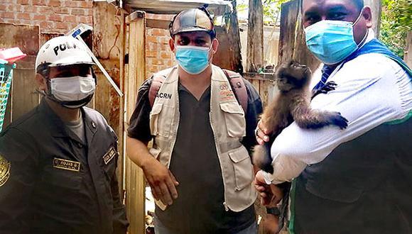 San Martín: rescatan a mono machín que permanecía enjaulado en una vivienda en Juanjuí (Foto: Ministerio Público)