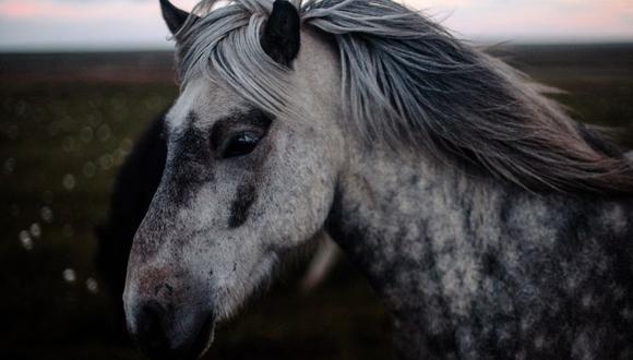 El caballo conmovió a miles de usuarios de YouTube y otras redes sociales. (Foto referencial - Pexels)