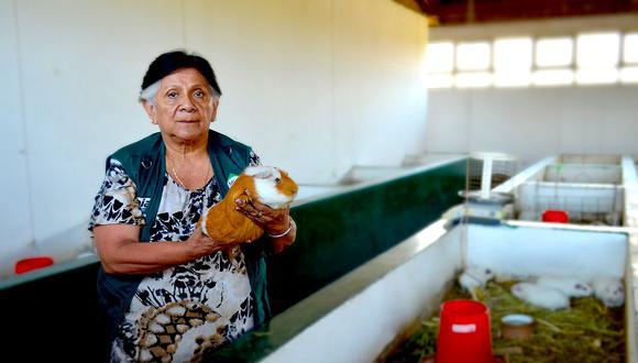 Con cuyes peruanos quieren combatir hambre y desnutrición en África