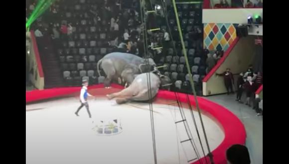 Uno de los elefantes cayó cerca de los asientos de los asistentes, quienes tuvieron que correr para evitar ser alcanzados. (Foto: Captura de pantalla)