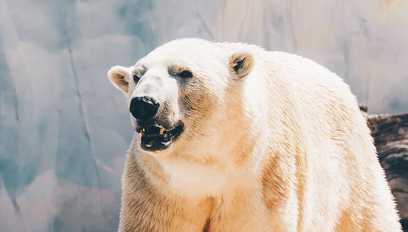 El animal podría ser asesinado la próxima vez que ponga en peligro la vida de una persona. (Foto referencial - Pexels)
