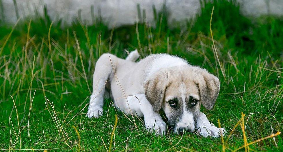 Maltrato animal: más de 20 perros son envenenados en Huancayo