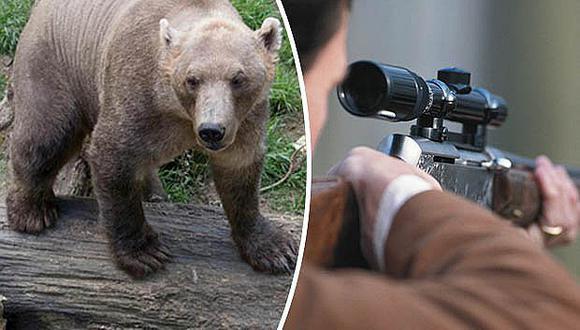 Alemania: oso se les escapa y lo asesinan sin que haga nada